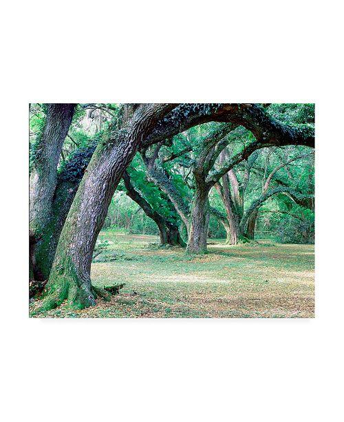 "Trademark Global Monte Nagler Louisiana Oaks Louisiana Canvas Art - 20"" x 25"""