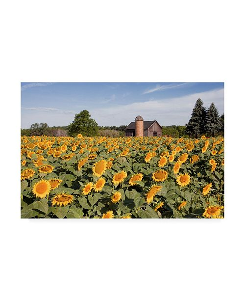 """Trademark Global Monte Nagler Sunflowers and Barn Owosso Mi Canvas Art - 20"""" x 25"""""""