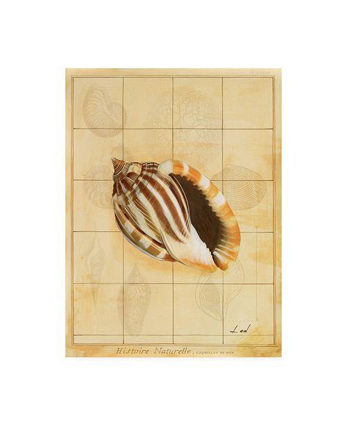 "Trademark Global Pablo Esteban Shell Sketch Art 2 Canvas Art - 36.5"" x 48"""