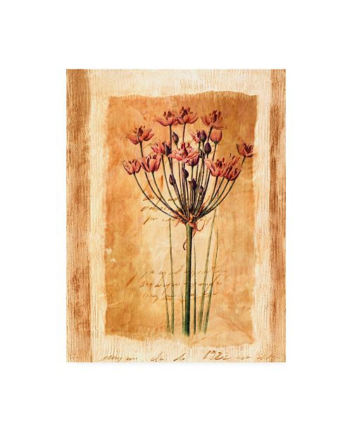 "Trademark Global Pablo Esteban Pink Flowers Distress 1 Canvas Art - 36.5"" x 48"""