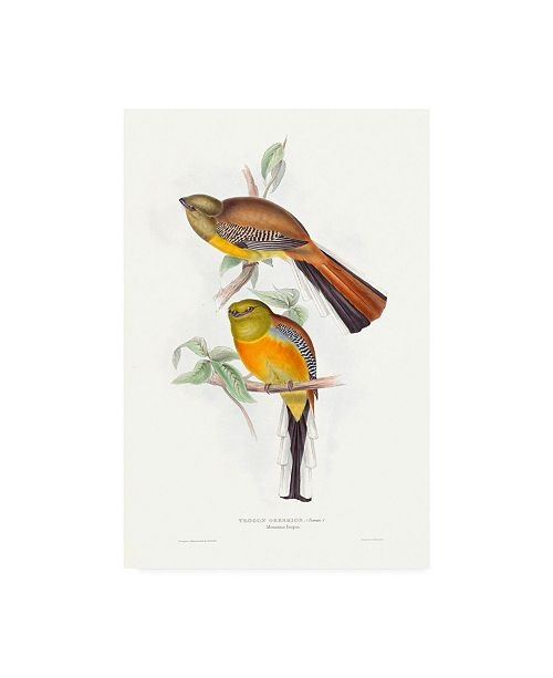 "Trademark Global John Gould Tropical Trogons VI Canvas Art - 27"" x 33.5"""