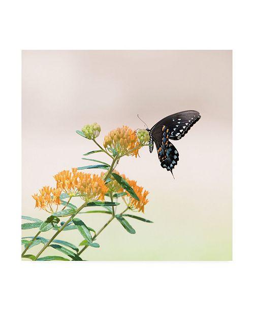 "Trademark Global PH Burchett Butterfly Portrait II Canvas Art - 15.5"" x 21"""