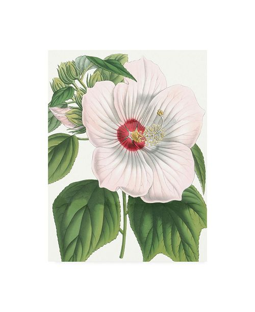 "Trademark Global Vision Studio Floral Beauty IV Canvas Art - 15.5"" x 21"""