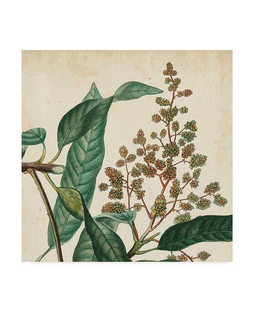 "Trademark Global Vision Studio Garden Bounty II Canvas Art - 15"" x 20"""