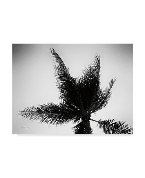 "Trademark Global Debra Van Swearingen Palm Tree Looking Up IV Canvas Art - 20"" x 25"""