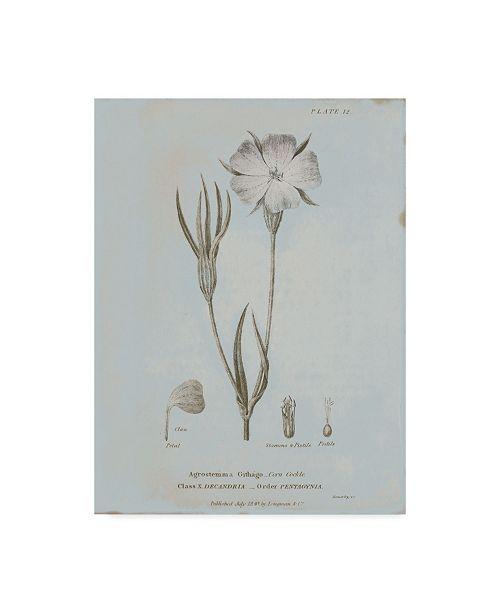"Trademark Global Wild Apple Portfolio Conversations on Botany III Blue Canvas Art - 37"" x 49"""
