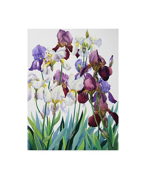 "Trademark Global Christopher Ryland White and Purple Irises Canvas Art - 20"" x 25"""