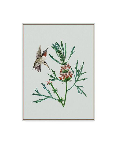 "Trademark Global Melissa Wang Leonurus Japonicus II Canvas Art - 37"" x 49"""