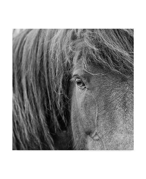 "Trademark Global PH Burchett Black and White Horses VI Canvas Art - 15"" x 20"""