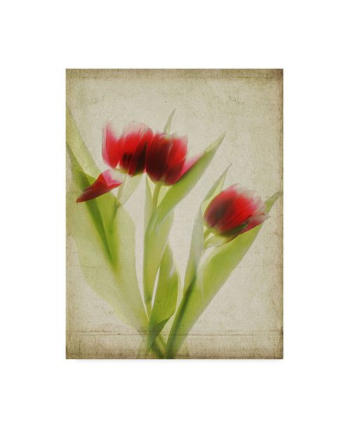 "Trademark Global Judy Stalus Parchment Flowers I Canvas Art - 37"" x 49"""