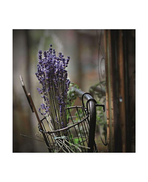 "Trademark Global Christine Sainte-Laudy Bouquet of Lavender Canvas Art - 15"" x 20"""
