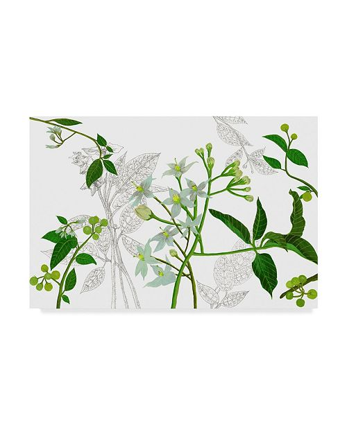 "Trademark Global Melissa Wang Solanum I Canvas Art - 20"" x 25"""