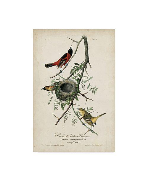 "Trademark Global John James Audubon Orchard Orioles Canvas Art - 15"" x 20"""