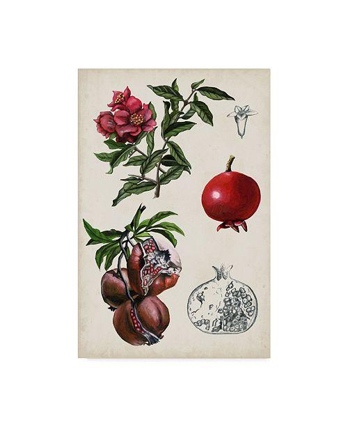 """Trademark Global Naomi Mccavitt Pomegranate Composition II Canvas Art - 20"""" x 25"""""""