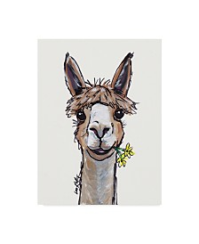"Hippie Hound Studios Alpaca Lycoming Canvas Art - 20"" x 25"""