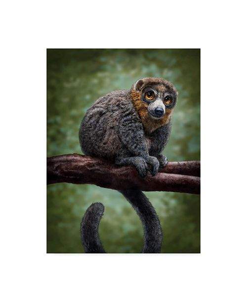 "Trademark Global Patrick Lamontagne Mongoose Lemur Totem Canvas Art - 15"" x 20"""