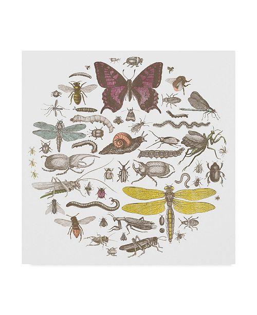 "Trademark Global Wild Apple Portfolio Insect Circle Ii Bright Canvas Art - 20"" x 25"""