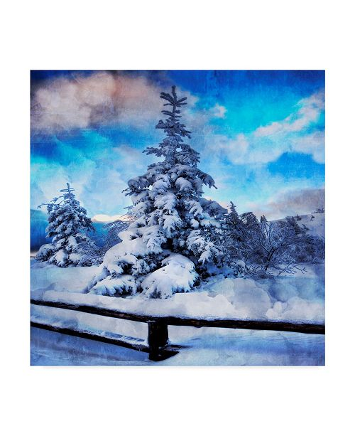 "Trademark Global Philippe Sainte-Laudy My Beautiful Fir Tree Canvas Art - 15"" x 20"""