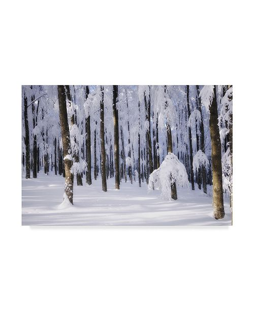 "Trademark Global Philippe Sainte-Laudy White Muslin Canvas Art - 37"" x 49"""