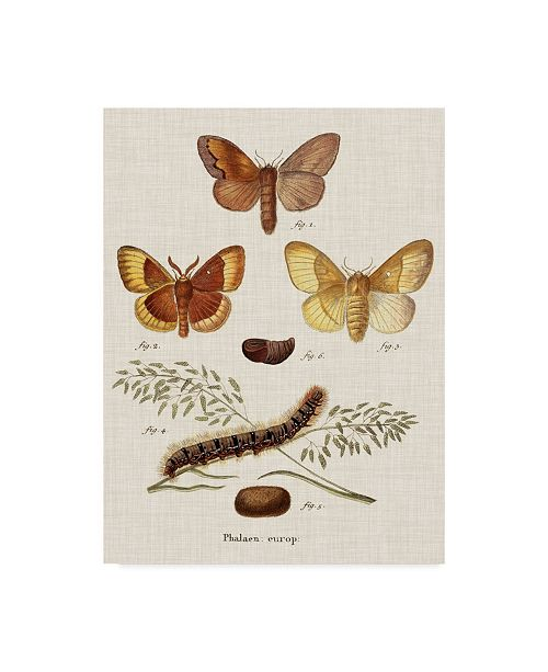 "Trademark Global Johann Esper Life Cycle of a Moth I Canvas Art - 20"" x 25"""