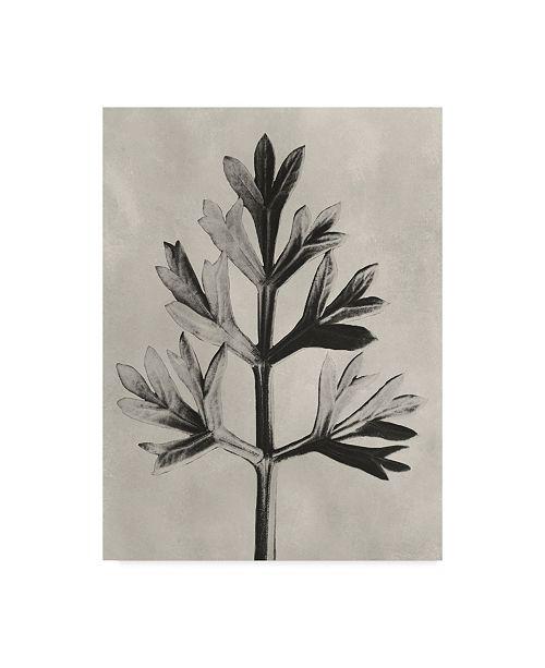 "Trademark Global Karl Blossfeldt Ua Ch Blossfeldt Botanical I Canvas Art - 20"" x 25"""