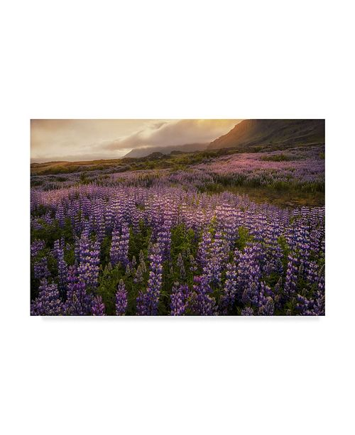 "Trademark Global Danny Head Field of Lupines Canvas Art - 15"" x 20"""