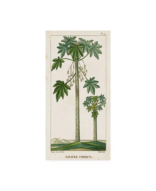 "Trademark Global Turpin Turpin Exotic Palms II Canvas Art - 20"" x 25"""