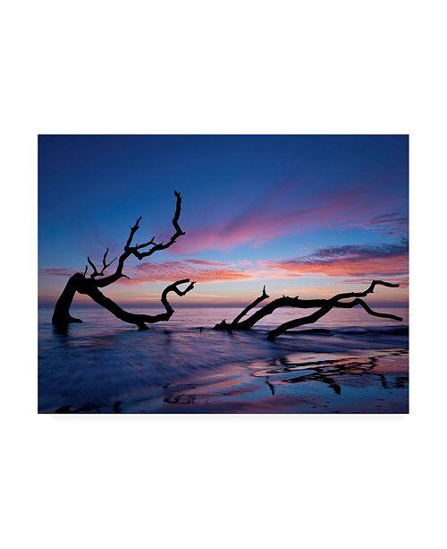 """Trademark Global PH Burchett Driftwood Beach Canvas Art - 20"""" x 25"""""""