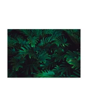 "PhotoINC Studio Tropical 2 Canvas Art - 36.5"" x 48"""