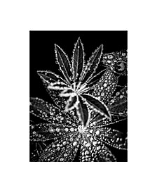 "Incado Crystal I Canvas Art - 15.5"" x 21"""