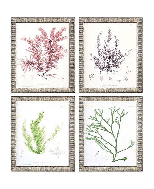 "Paragon Seaweed I Framed Wall Art Set of 4, 11"" x 9"""
