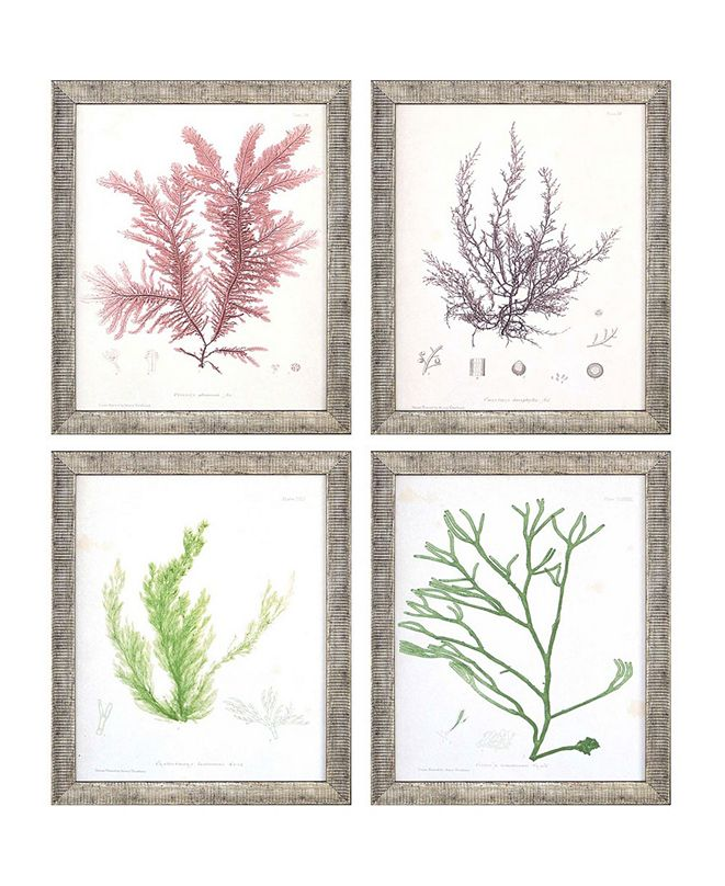 "Paragon Seaweed I Framed Wall Art Set of 4, 11"" x 9"""