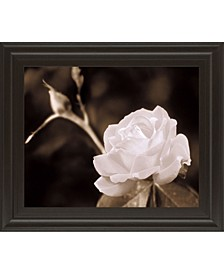 "Rose Sophistication by Mark Castiglia Framed Print Wall Art, 22"" x 26"""
