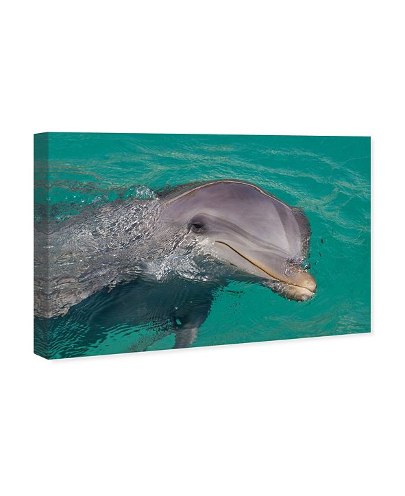 "Oliver Gal Atlantic Bottlenose Dolphin by David Fleetham Canvas Art, 45"" x 30"""
