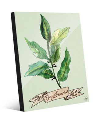 Watercolor Bay Leaves on Green 24