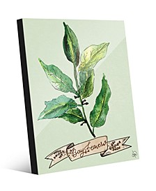 Watercolor Bay Leaves on Green Acrylic Wall Art Print Collection