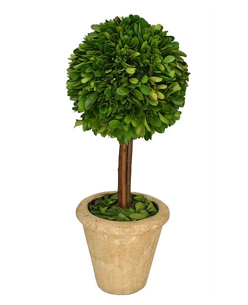 """Mills Floral 16"""" H Preserved Boxwood Single Ball Topiary"""