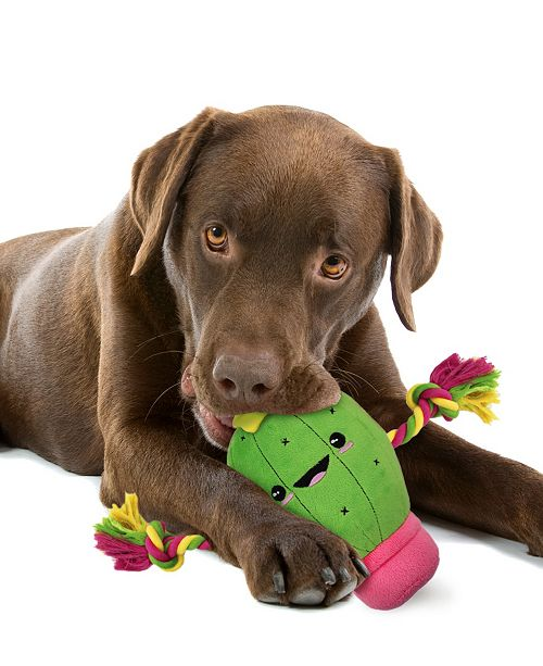 Pets First Plush Cactus Pet Rope Toy with Squeaker