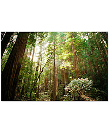Ariane Moshayedi 'Muir Woods' Large Canvas Wall Art