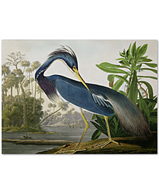 John James Audubon 'Louisiana Heron' Canvas Wall Art