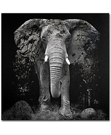 """Erik Brede 'The Disappearance of the Elephant' 35"""" x 35"""" Canvas Art Print"""