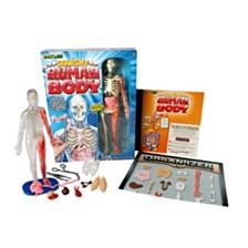 Smartlab Toys - Squishy Human Body