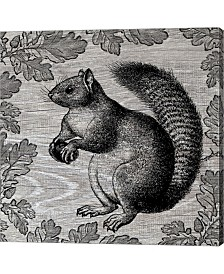 Squirrel I By Andrea Haase Canvas Art