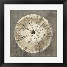 Sand Dollar IB by Aimee Wilson Framed Art