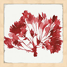 Red Coral Iv By Aimee Wilson Framed Art