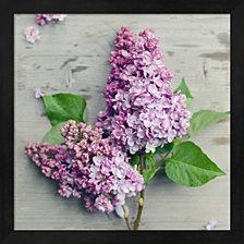 Fresh Lavender Blooms by Sarah Gardner Framed Art