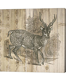 Natural History Lod3 By Elyse Deneige Canvas Art