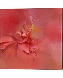 Salmon Hibiscus 2 By Jai Johnson Canvas Art