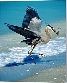 Florida Captiva Island Great Blue Heron Bird By Jaynes Gallery, Danita Delimont Canvas Art