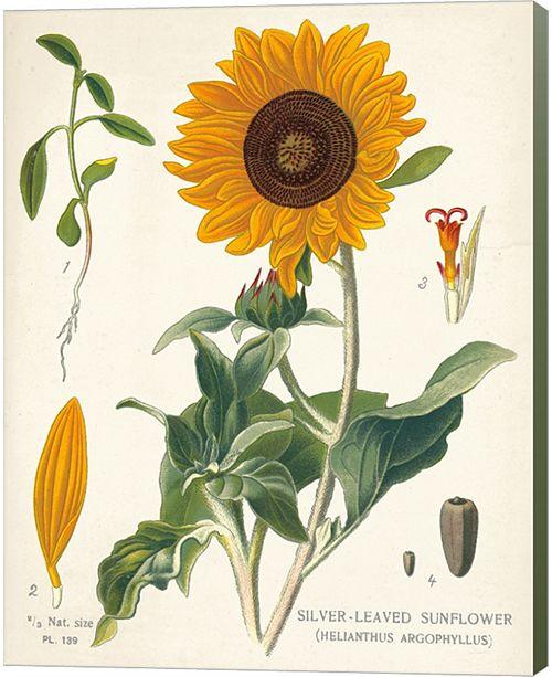 Metaverse Sunflower Chart On Ivory By Sue Schlabach Canvas Art